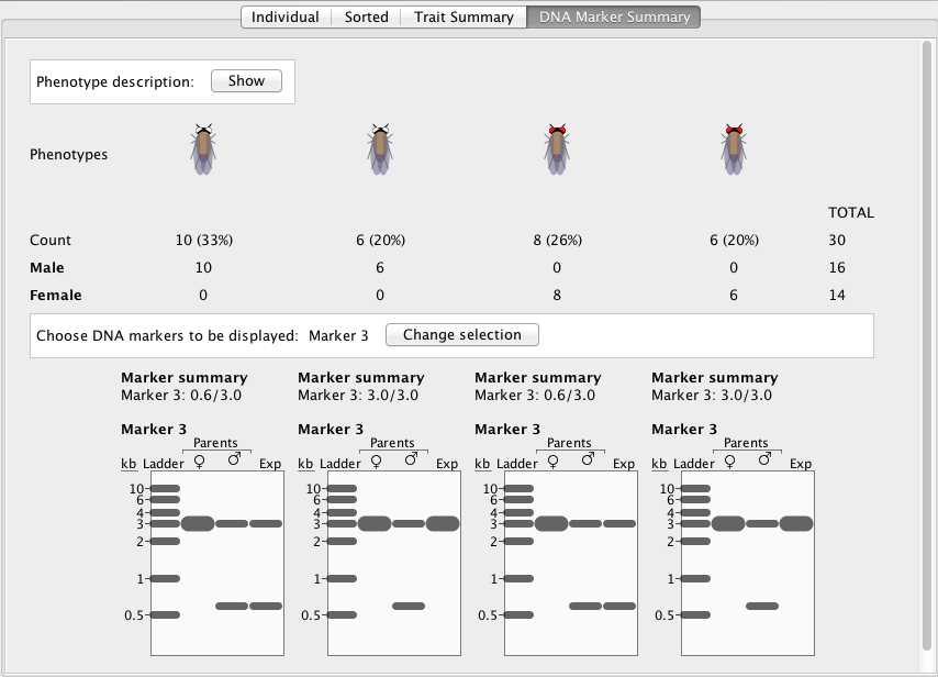 StarGenetics fly user interface showing DNA maker functionality